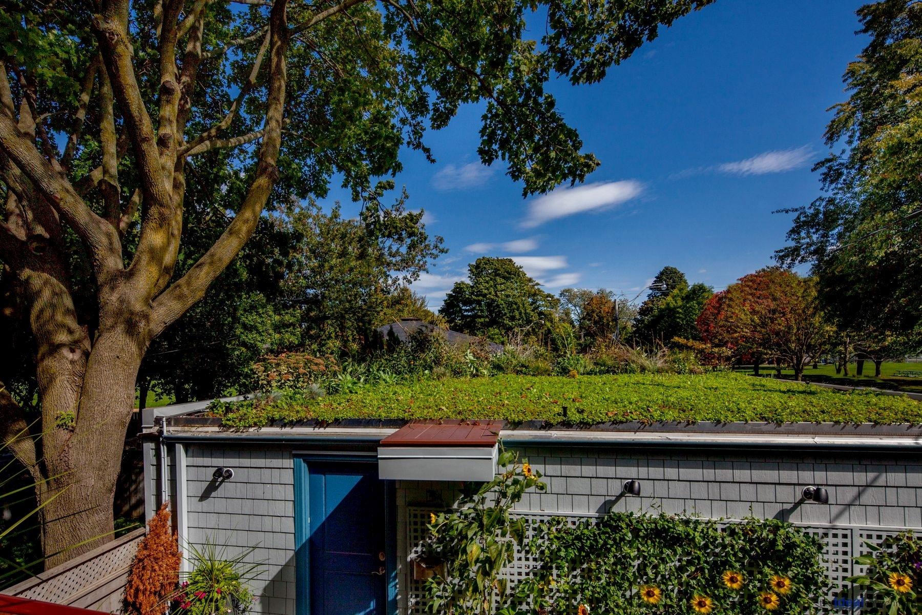 Kew Beach House Condominium Green Roof